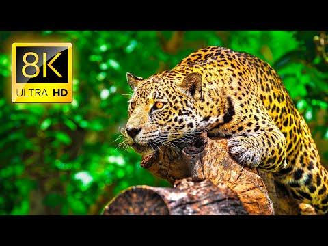 Adéntrate En La Naturaleza Salvaje Con Este Video