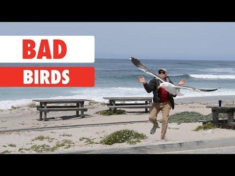 When Good Birds Go Bad...