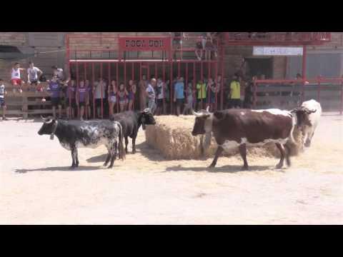 Anem de Festa: Correbous d'Alfara de Carles (27/08/2016)