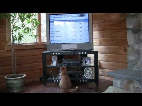 Cat Watches Litter Kwitter Training DVD