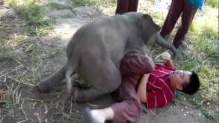 Baby Elephant Loves Cuddling with Arthur