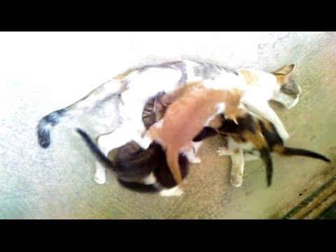 Lascarid striscia allatto del trattamento di persona