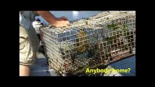 How to Bait a Lobster Trap