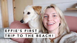 EFFIE GOES TO THE BEACH! | Estée Lalonde