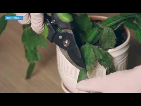 Как ухаживать за домашними растениями зимой: простые правила