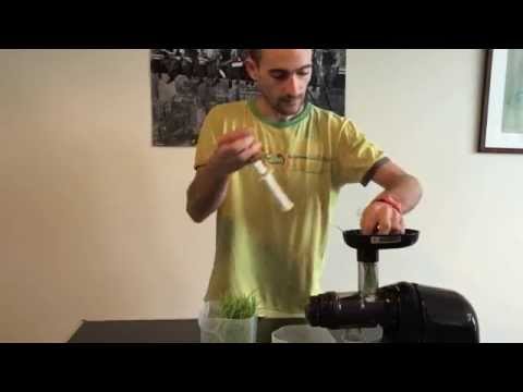 Écorce de tremble avec le diabète sucré vidéo
