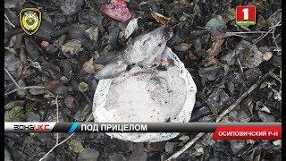 В Осиповичском районе компания мужчин получила путевки на добычу пушного зверя. Зона Х