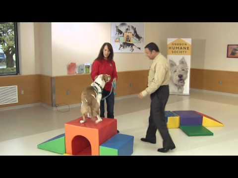 Tanya Roberts, Animal Behaviour Specialist, Oregon Humane Society