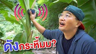 Can We Turn Banana Tree Into Speaker!!