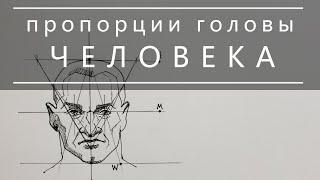 Смотреть онлайн Пропорции головы человека для рисования художника