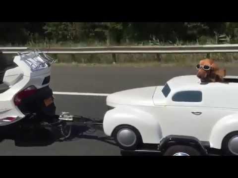 Cane con occhiali da moto e macchina personale!