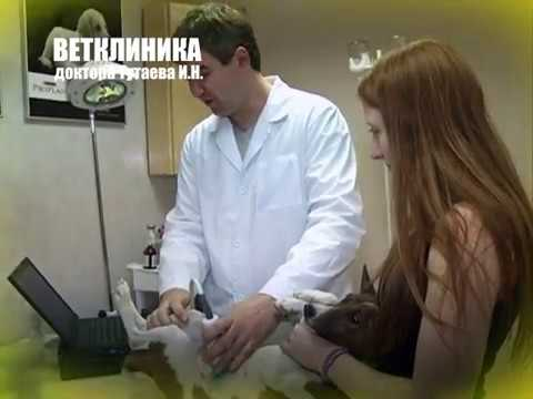 Ветеринарная клиника доктора Тутаева, Смоленск