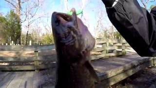 Catfish and Bowfin Fishing at the White Oak River (Maysville, NC)