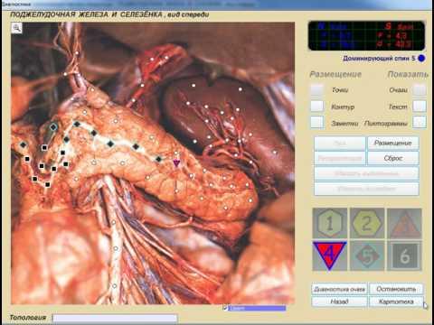 Глисты у организме человека