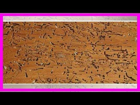 Vrillettes domestiques : Remèdes naturels comment se débarrasser des vrillettes ? - 0 - Comment se débarrasser des vrillettes ?