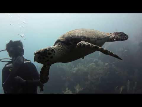 Underwater Utila, Utila,Honduras