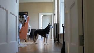Webkick - Video - 1