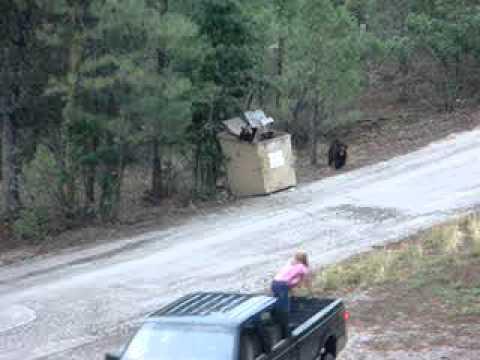 הצלה נועזת של 3 גורי דובים!