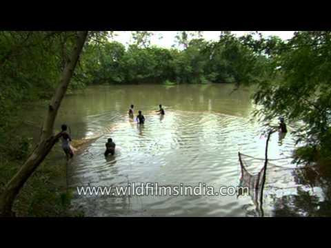 Fishing in a pond in Uttar Pradesh, India