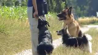 preview picture of video 'LEIHFRAUCHEN - Julia Weber, Tierbetreuung mit Herz | A-3424 Wolfpassing am Wienerwald'
