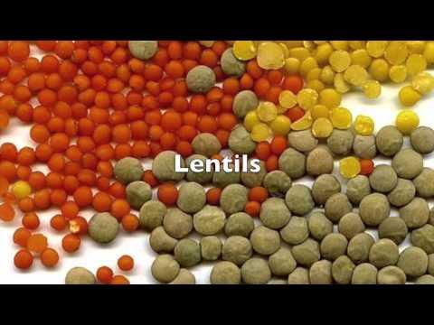 Tibetan Pilz von Diabetes