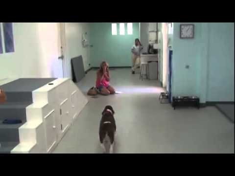 She Was Told That Her Dog Would Never Walk Again...But Then This Happened. OMG
