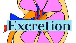 Excretion-Introduction