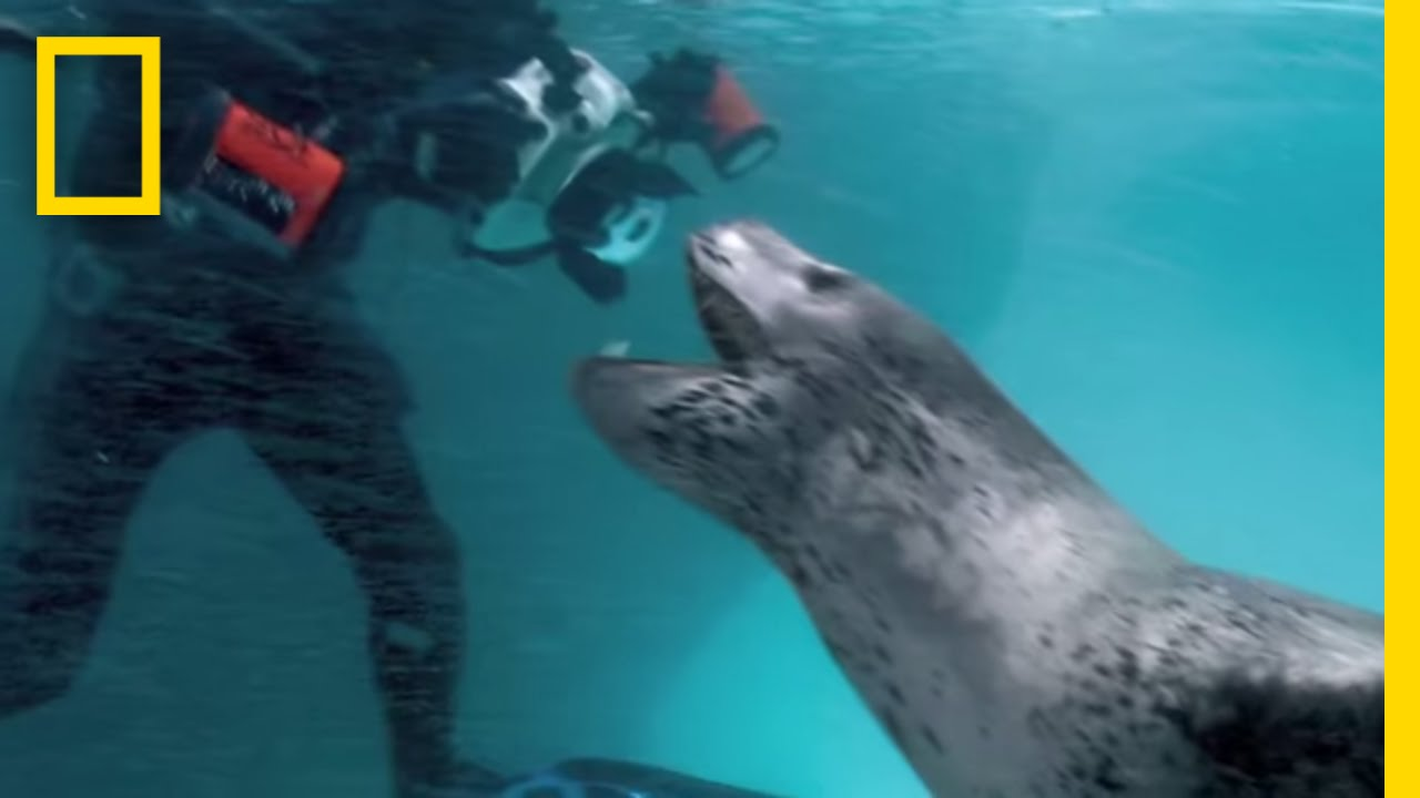 National Geographic Photographer Meets Deadly Leopard Seal