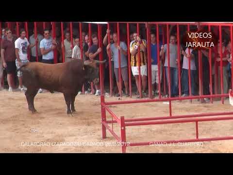 CALATORAO ( ZARAGOZA ) SÁBADO 25 AGOSTO 2012 (CONCURSO DE GANADERIAS) MEJOR TORO ( J.L.CUARTERO )