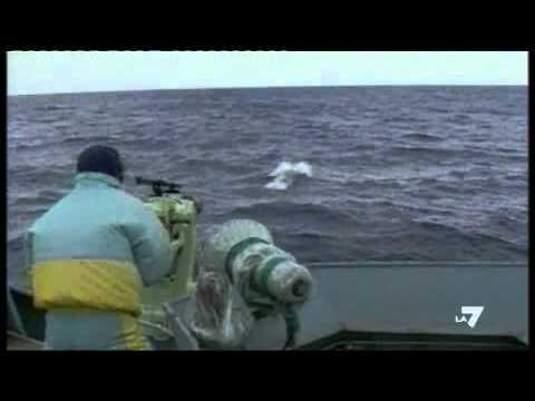 La pesca e novovoronezhy