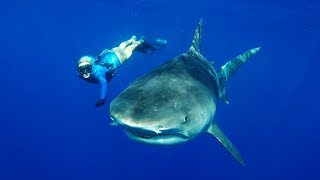 GoPro: Freediving with Tiger Sharks in 4K