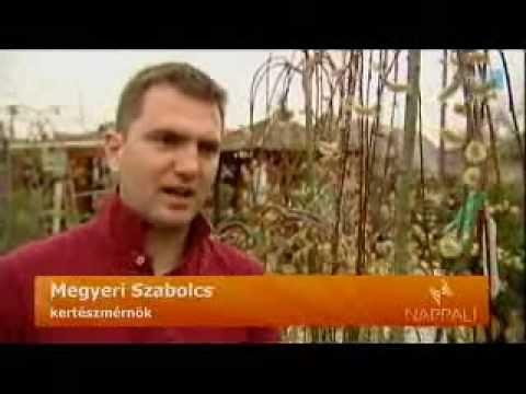 Van Hibiscus hasznos a magas vérnyomás