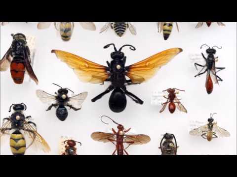Viermi morți