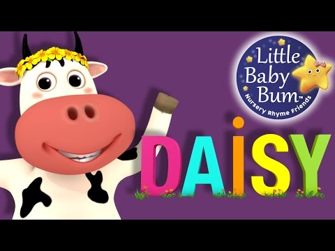 DAISY | Nursery Rhymes | Original Song | by LittleBabyBum!