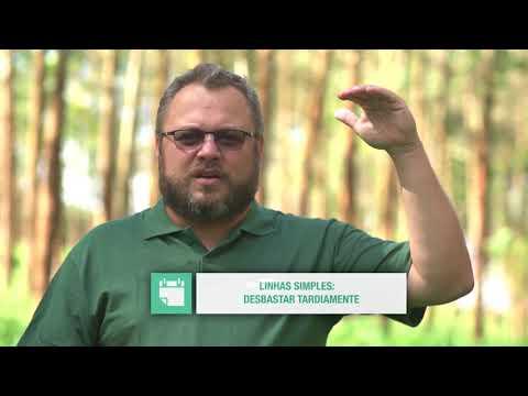 Manejo de eucaliptos em sistemas ILPF