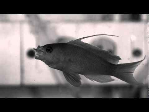 Watching Fish Eating At 1000fps Makes Me Hungry