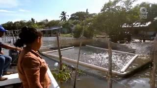 Retratos - Pescadora y Balankanché