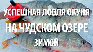 Зимняя рыбалка на окуня в чудском озере