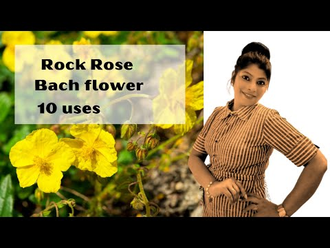 Rockrose Bach flower- get instant help, terrorism protection,stop harrasment,fire protection