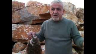 Kıyı balıkçısı Necmi Fidan Pisi avı Platichthys flesus