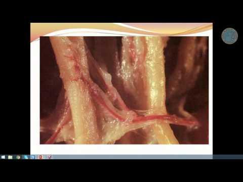 Analizador de nivel de azúcar y colesterol en la sangre