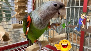 Parrot Chews Off Perch He's Sitting On!!!