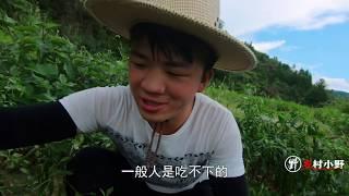 农村最火爆的红辣椒,每年收获都很不错