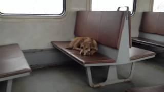 Собака в собаке... Да и пох...