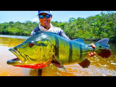 Big Peacock Bass in Colombia