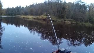Где поймать лосося в ленинградской области