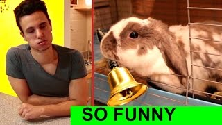 Owner regrets teaching his rabbit THIS new trick