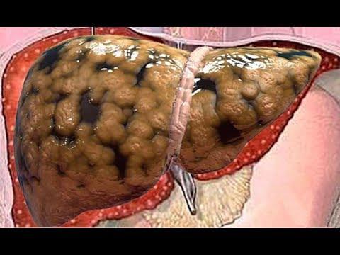 La velocidad de la quema de la grasa en el organismo