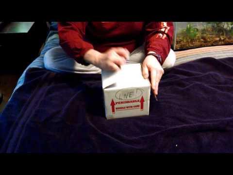 Unboxing dart frogs