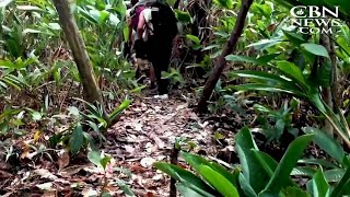 It Was 'Like Hell': Migrants Stepping Over Dead Bodies on Dangerous Jungle Trek North toUS
